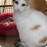 Adopt A Pet :: Dabble - Warrenton, MO