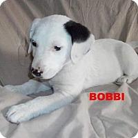 Adopt A Pet :: Bobbi - Silverdale, WA