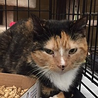 Adopt A Pet :: Fleur - Columbia, SC
