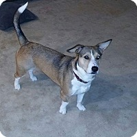 Adopt A Pet :: Bailey (ETAA) - Allentown, PA