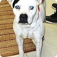 Adopt A Pet :: frosty - Eastpoint, FL