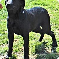 Adopt A Pet :: Diamond - Columbia, TN