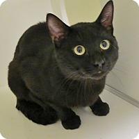 Adopt A Pet :: Franky - Georgetown, TX