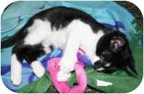 Domestic Shorthair Kitten for adoption in Marietta, Georgia - Pogo