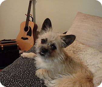 Cairn Terrier Mix Dog for adoption in Douglas, Ontario - Winston