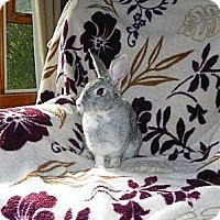 Adopt A Pet :: Scarlett - North Gower, ON