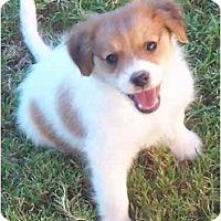 Adopt A Pet :: DALE - Phoenix, AZ