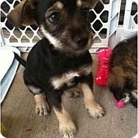 Adopt A Pet :: Autumn - Arlington, TX