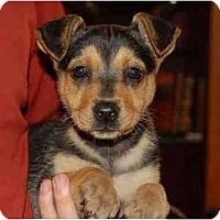 Adopt A Pet :: Gina - Chula Vista, CA