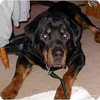 Adopt A Pet :: Bear - Surrey, BC