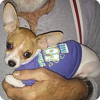 Adopt A Pet :: Archie - Golden Valley, AZ