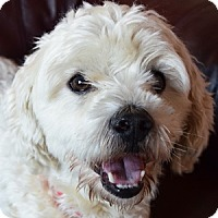 Adopt A Pet :: Chance - La Costa, CA