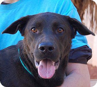 Labrador Retriever Mix Dog for adoption in Las Vegas, Nevada - Cooper