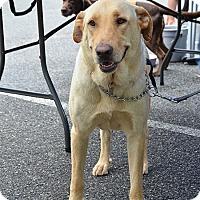 Adopt A Pet :: Sandy/Apache - Cumming, GA
