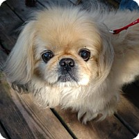 Adopt A Pet :: Bailey - Inver Grove, MN