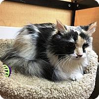 Adopt A Pet :: Chloe - Riverside, CA