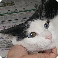 Adopt A Pet :: Marixa - West Dundee, IL