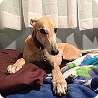 Adopt A Pet :: Kizzey - Fremont, OH