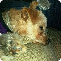 Adopt A Pet :: Little Fred - Rancho Mirage, CA
