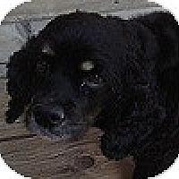 Adopt A Pet :: Bella - Hamilton, ON