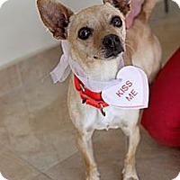 Adopt A Pet :: Tweetie - Mission Viejo, CA