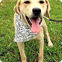 Adopt A Pet :: ADDIE - Leland, MS