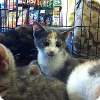 Adopt A Pet :: Caroline - Hamilton, ON