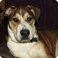 Adopt A Pet :: Dexter- Illinois - Wood Dale, IL