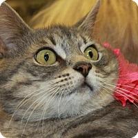 Adopt A Pet :: MIA - Clayton, NJ