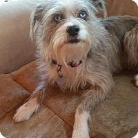 Adopt A Pet :: Molly - Normandy, TN