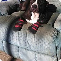Adopt A Pet :: Mercy, looking for love! - Sacramento, CA
