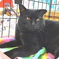 Adopt A Pet :: Bud - E. Claridon, OH
