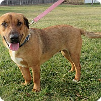 Adopt A Pet :: Daffy - New Oxford, PA