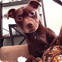 Adopt A Pet :: RICKY! - Philadelphia, PA