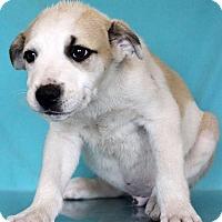 Adopt A Pet :: Harold - Waldorf, MD