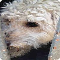 Adopt A Pet :: PELULA - Hanford, CA