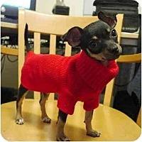 Adopt A Pet :: Chica - SCOTTSDALE, AZ
