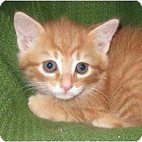 Adopt A Pet :: Brady - Richmond, VA
