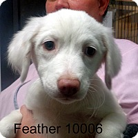 Adopt A Pet :: Feather - Greencastle, NC