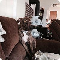 Adopt A Pet :: Rex - Garwood, NJ
