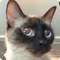 Adopt A Pet :: Anja - Chattanooga, TN