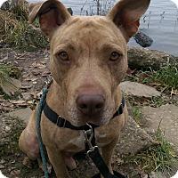 Adopt A Pet :: Thor - Jerseyville, IL