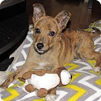 Adopt A Pet :: Logan - New Oxford, PA