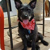 Adopt A Pet :: Waldo - Davie, FL