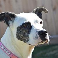 Adopt A Pet :: Soul - Tomball, TX