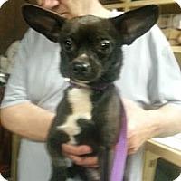Adopt A Pet :: Simon - Sugar Land, TX
