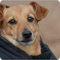 Adopt A Pet :: Ollie - Ft. Myers, FL