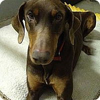 Adopt A Pet :: Sirena--adopted!! - New Richmond, OH