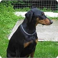 Adopt A Pet :: Misty - Rigaud, QC