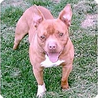 Adopt A Pet :: JoeJoe - Gainesboro, TN